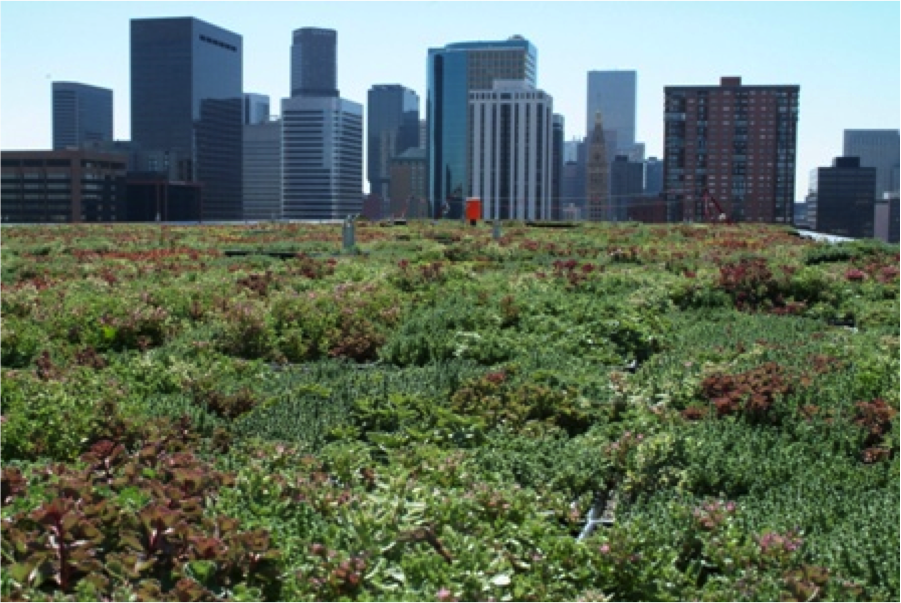 A green roof helps cool an urban environment